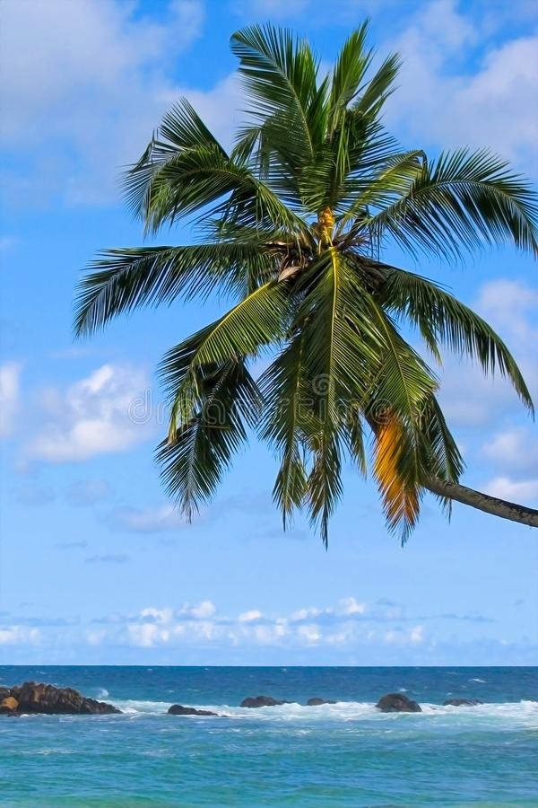 Palm tree over the ocean against the sky stock photo