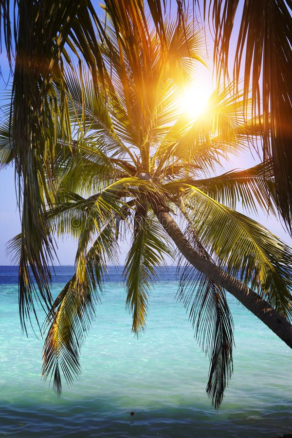 Palm tree over sea in the light of the sunset . Maldives stock image