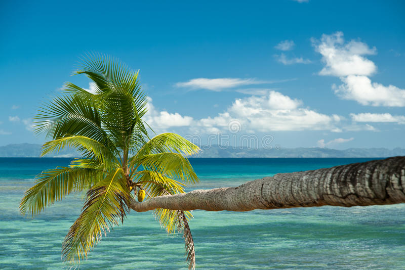 Palm tree over water royalty free stock photo