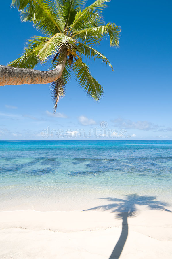 Palm Tree Over Water Royalty Free Stock Images