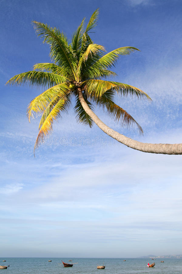 Download Palm tree over water stock photo. Image of beautiful - 34831178