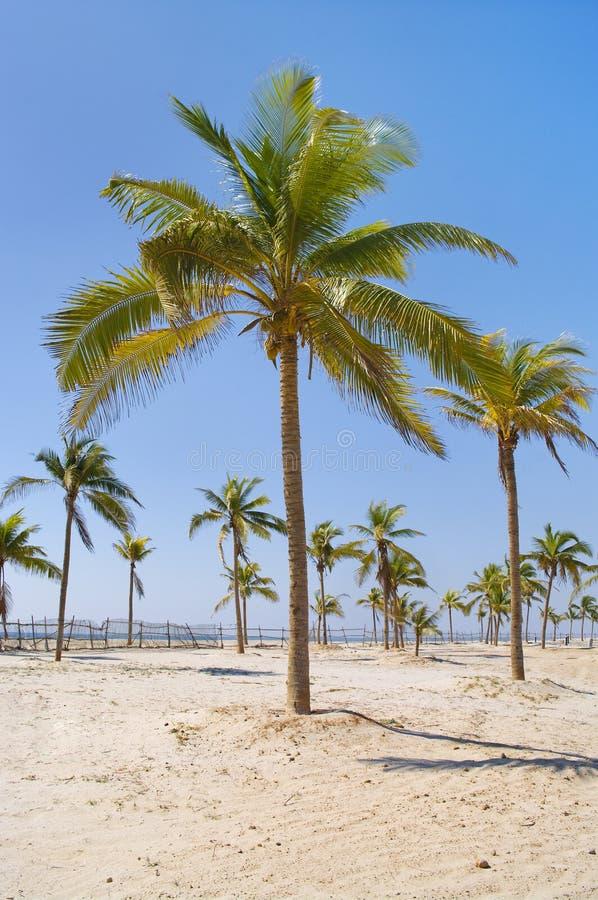 palm tree over white sand beach. royalty free stock photos