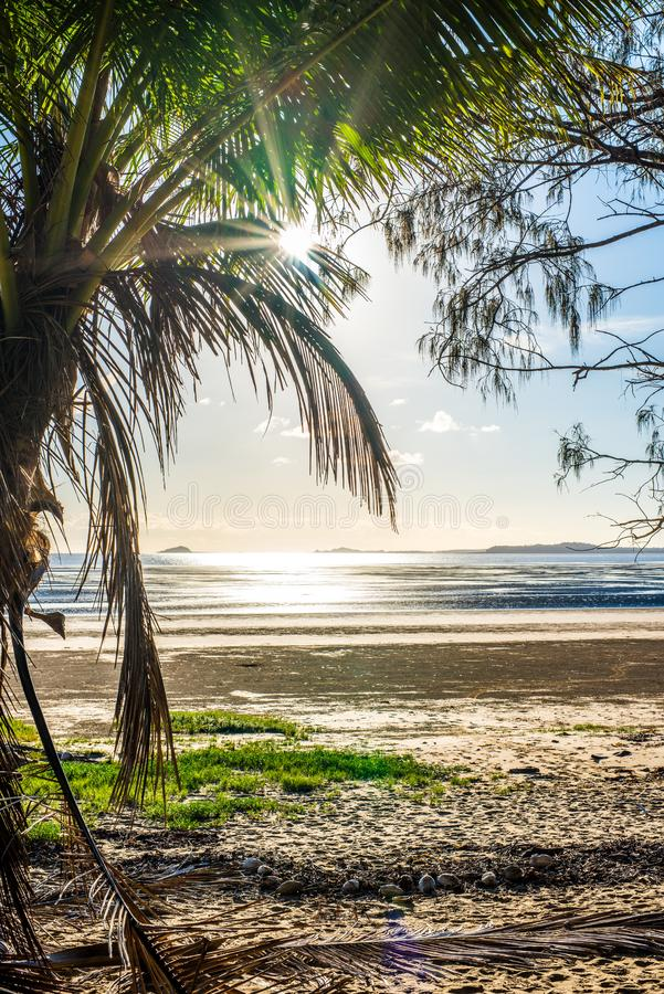 A palm tree paradise overlooks the beach with lens flares royalty free stock images
