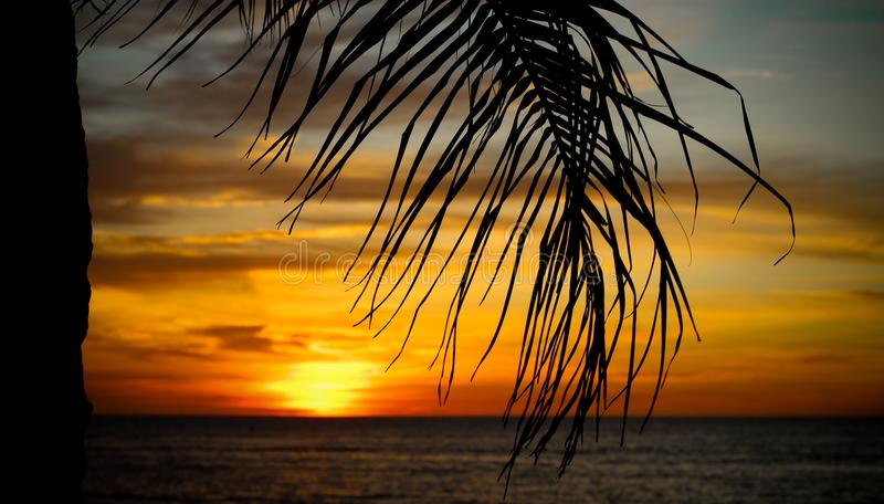 Palm tree. And sunset in the beach stock photo