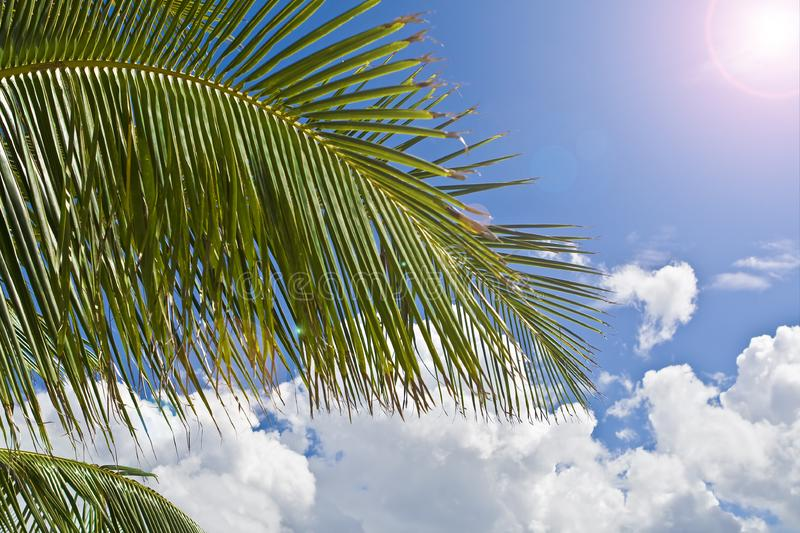 Download Palm tree paradise stock image. Image of clouds, beauty - 6844685
