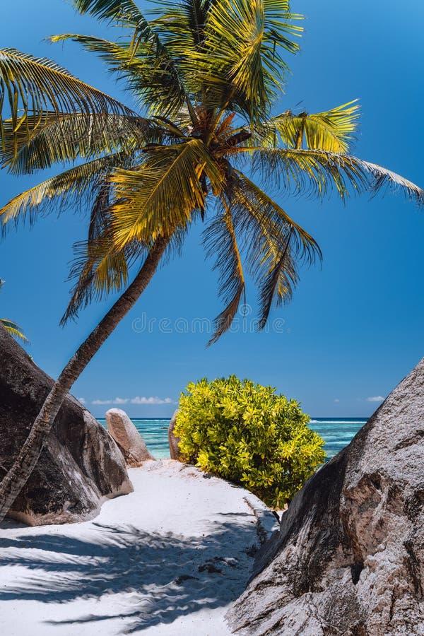 Palm tree at paradise Anse Source d`Argent beach at La Digue, Seychelles royalty free stock photos