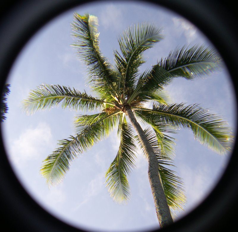 Free Palm Tree Pardise Royalty Free Stock Photos - 8120198