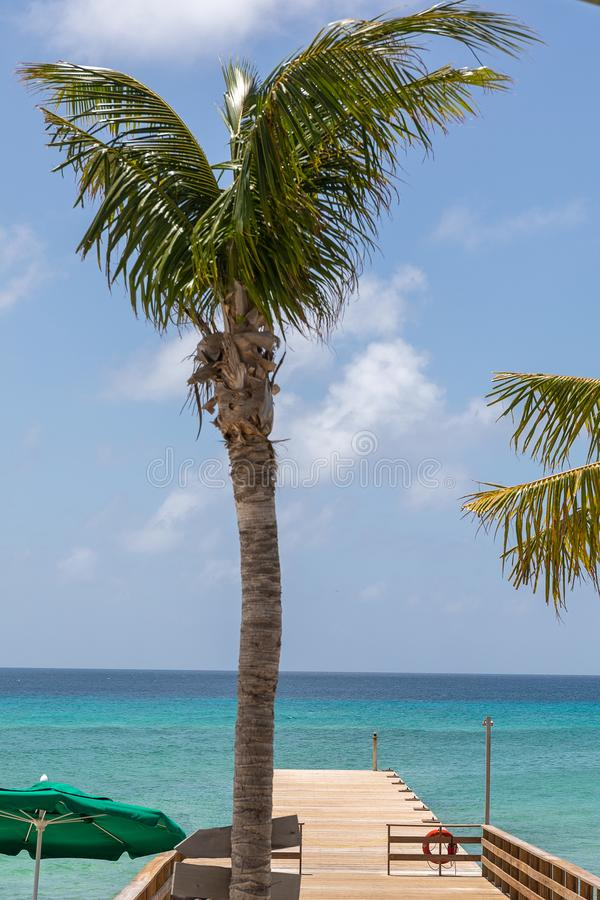 Palm tree by pier over turquoise ocean royalty free stock images