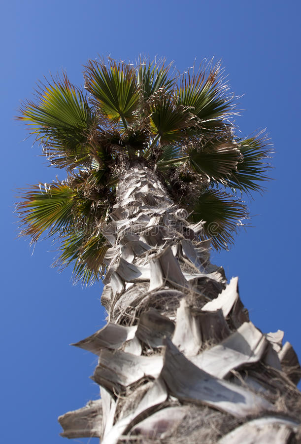 Palm Tree - RAW Format Stock Image