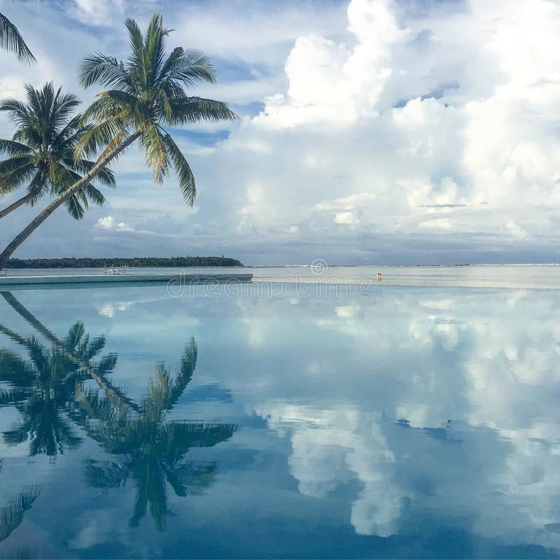 Palm tree reflecting on Siargao Island, Philippines stock images