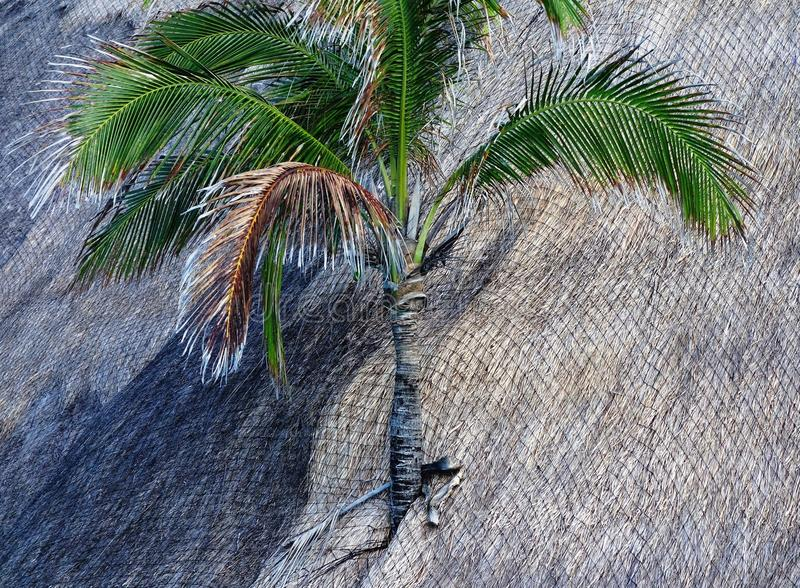 Palm tree on a roof