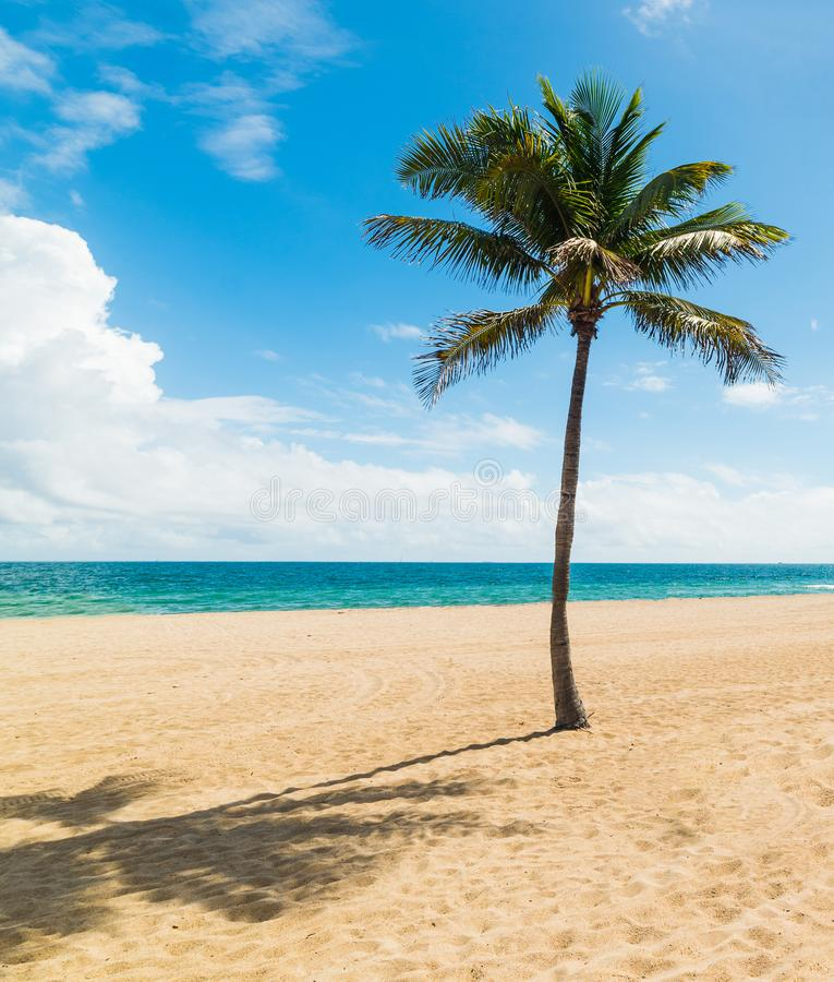 Guadeloupe Beach: Palm Tree And Golden Sand In La Perle Beach In Basse Terre