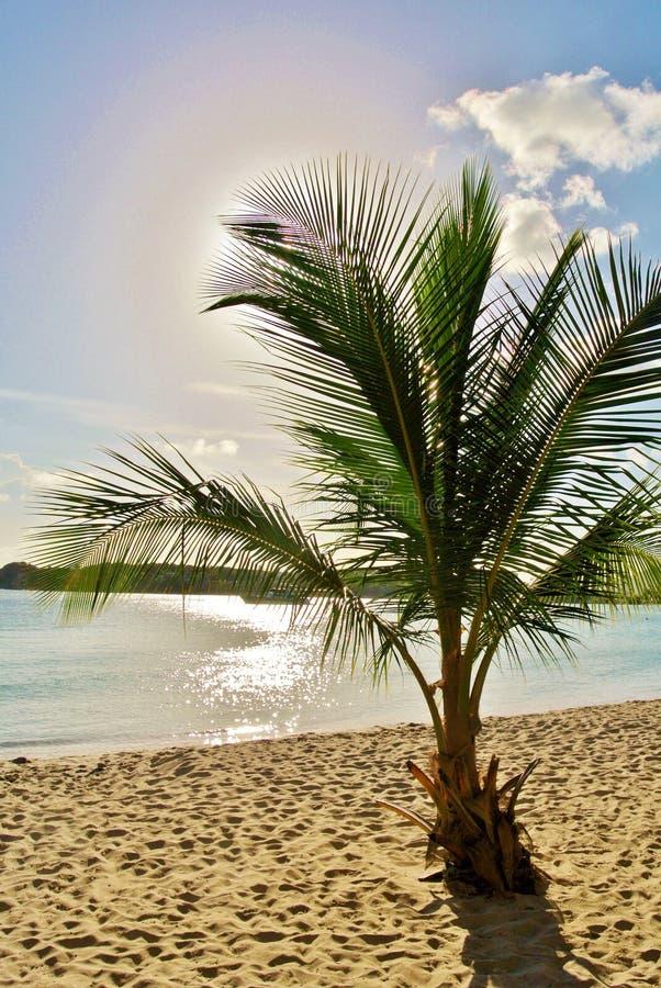 Palm tree on sandy beach royalty free stock photos