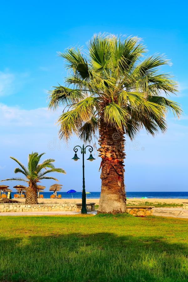 Palm tree at sandy beach, sea stock photo