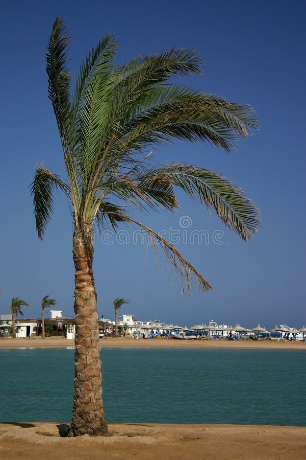 Palm tree by the sea stock photo