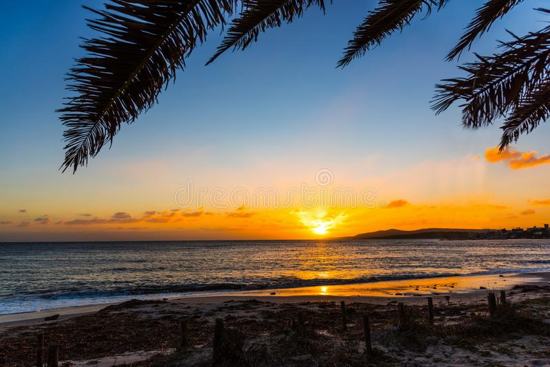 Palm tree by the sea in Alghero shore at sunset. Sardinia, Italy royalty free stock photos