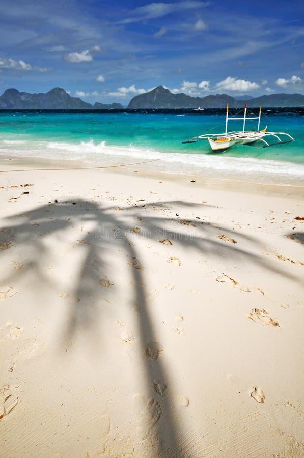 Download Palm Tree Shade stock photo. Image of nature, island, nido - 8086570