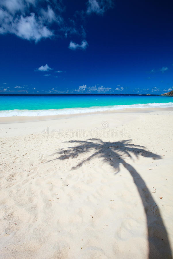 Download Palm tree shadow on beach stock photo. Image of beautiful - 17767854