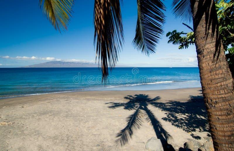 Palm Tree Shadow on Beach royalty free stock image