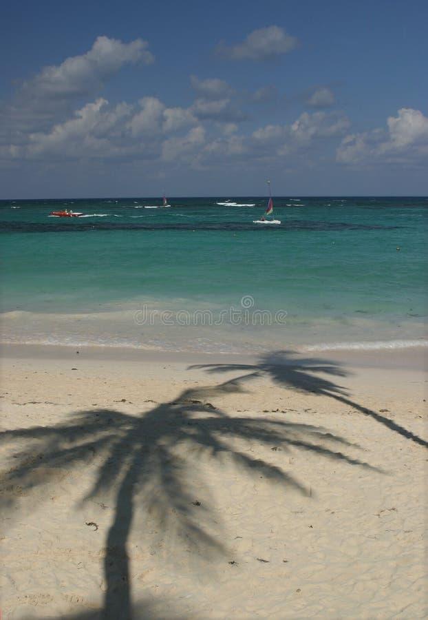 Palm tree shadow on beach stock photography
