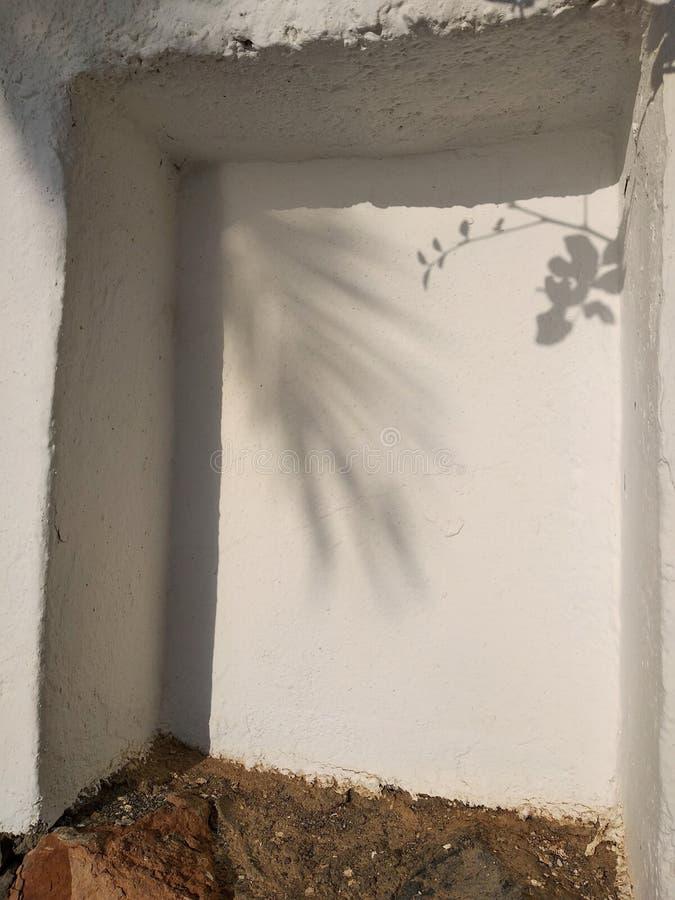 Palm tree shadow stock image