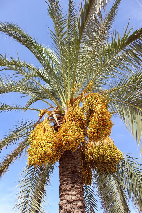 Palm tree. Sicily, Italy stock photo