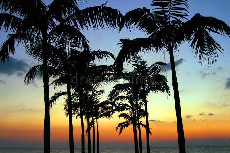 Palm Tree Silhouette Royalty Free Stock Photography