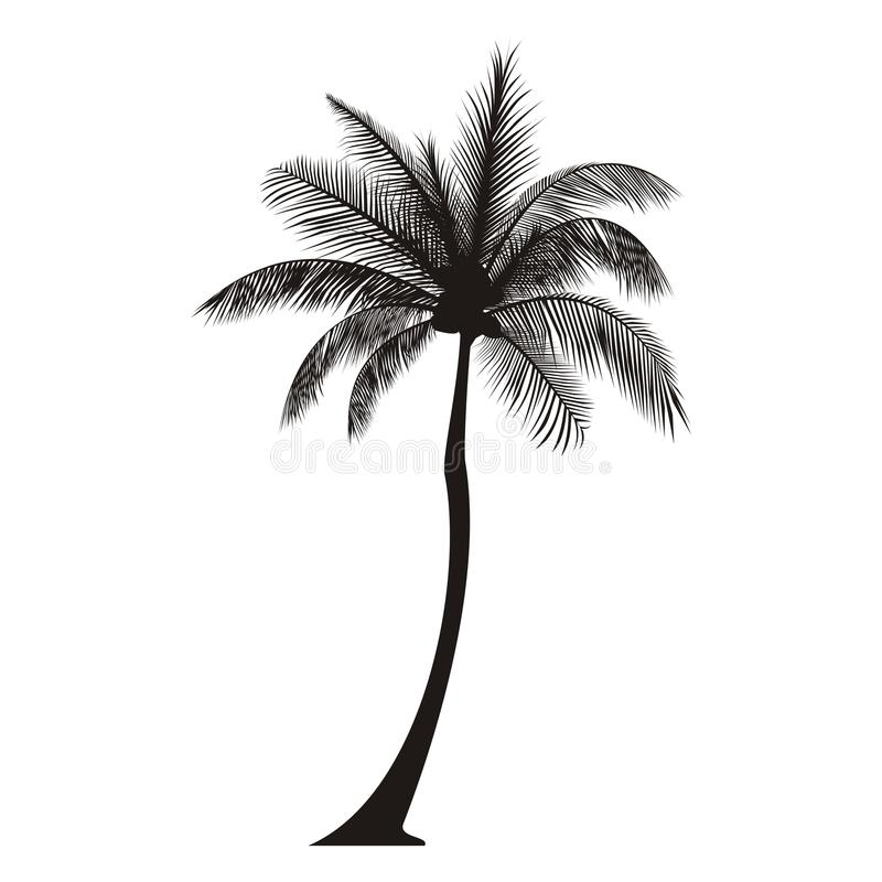 Palm Tree Silhouette. Silhouette of a regular tall palm tree
