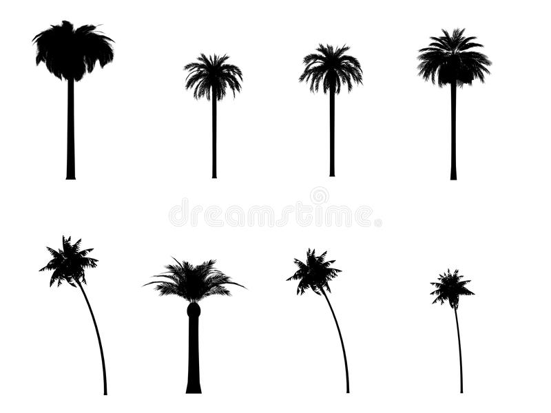 Download Palm tree silhouette 3d cg stock illustration. Image of draw - 14243829