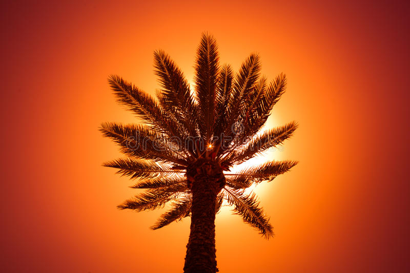 Download Palm tree silhouette stock photo. Image of sunny, calm - 32426422