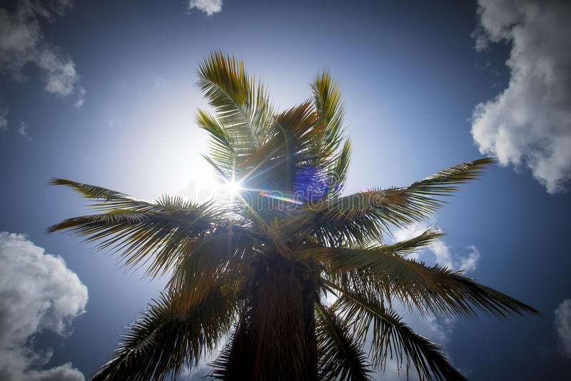 Download Palm tree stock image. Image of nature, landscape, tropical - 33389113