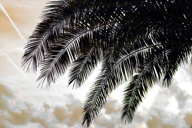 Palm tree silhouette royalty free stock photos
