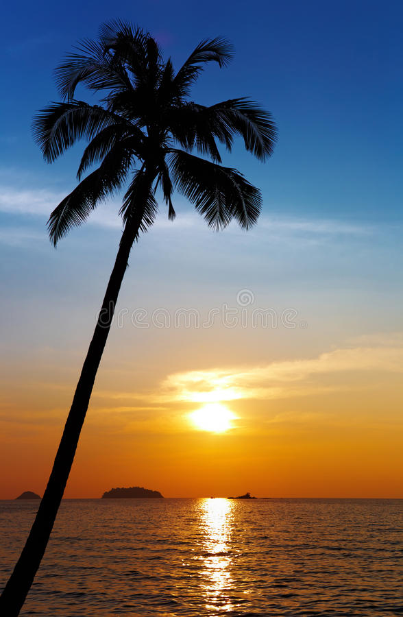 Download Palm Tree Silhouette At Sunset Stock Images - Image: 12393164
