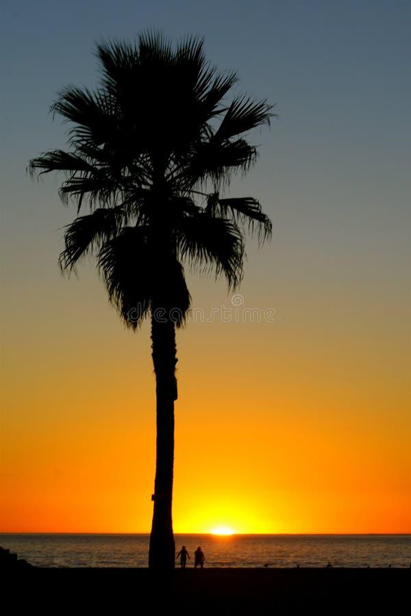 Free Palm Tree Silhouette Sunset Royalty Free Stock Photo - 5774685
