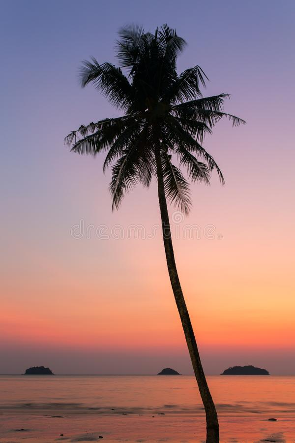 Palm tree silhouette at the sunset stock photography