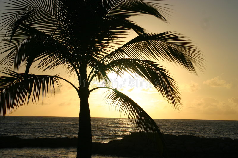 Palm tree silhouetted sunset stock image