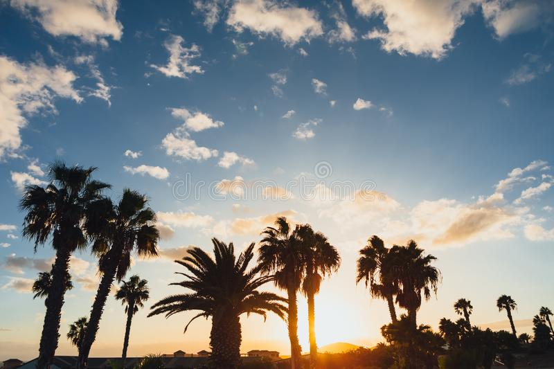 Palm tree silhouettes against sky and sunset background. Palm tree silhouettes against blue sky and sunset background stock image