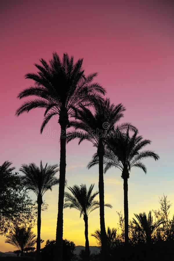 Palm trees against the pink sky during African sunset. stock images