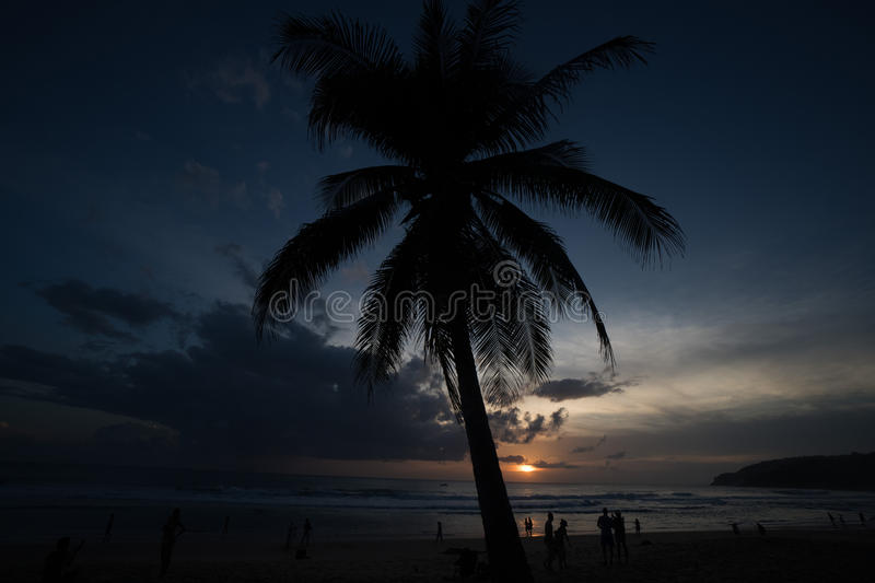 Palm tree and silhouettes of people walking on the beach during sunset. Palm tree and silhouettes of people walking on the beach during beautiful sunset. Summer stock photo