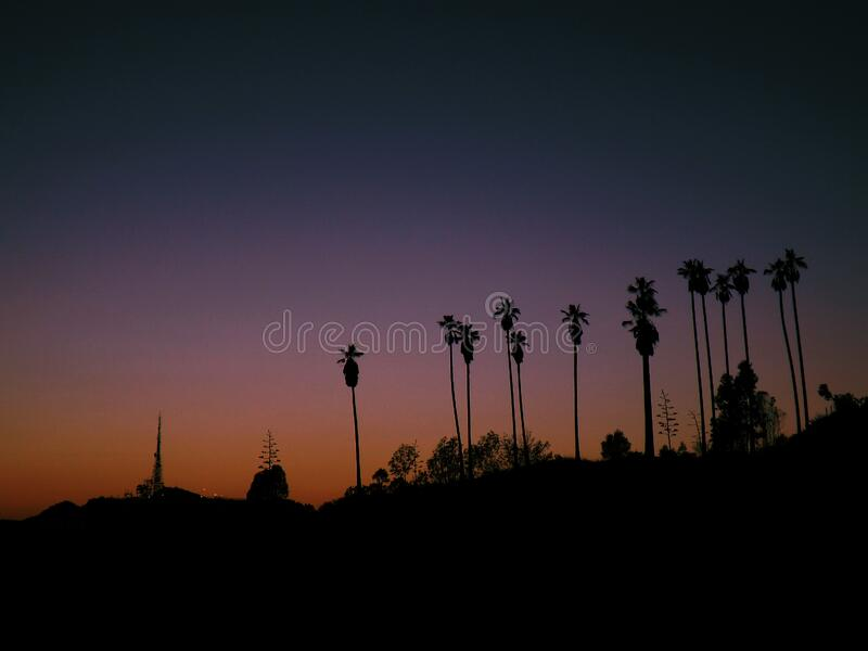Palm Tree Silhouettes At Sunset Free Public Domain Cc0 Image