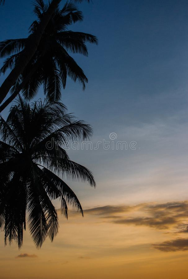 Palm tree silhouettes on sunset sky background. Colorful evening sky with coconut trees silhouettes. Scenic twilight on beach. Palm tree silhouettes on sunset royalty free stock photography