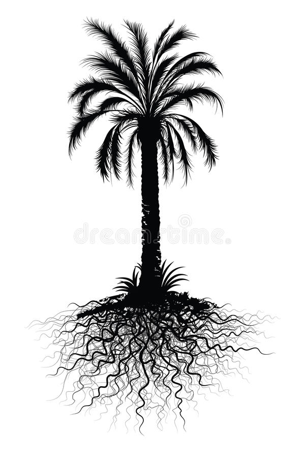Download Palm tree sketch stock vector. Illustration of tree, illustrated - 11345883