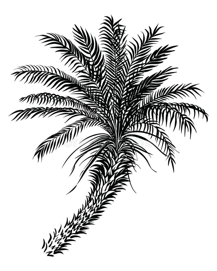 Palm tree sketch silhouette. Vector black lined illustration. vector illustration