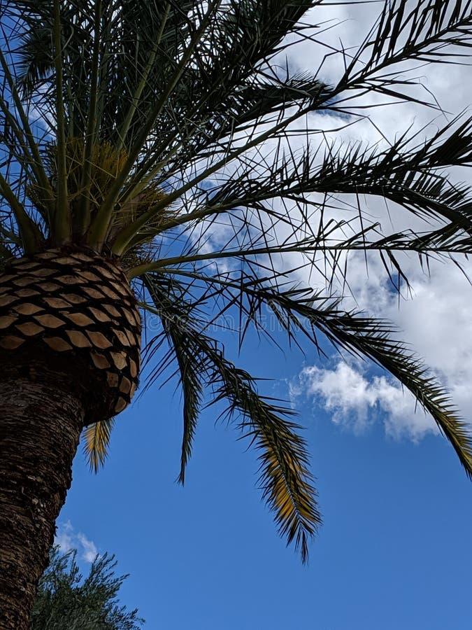 Palm tree skies stock photo