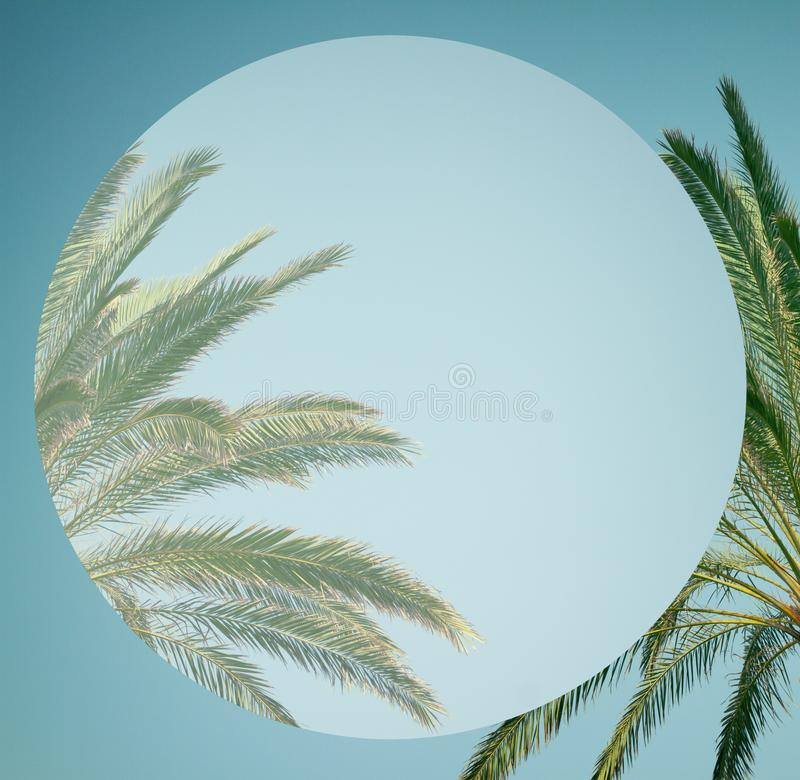 Palm tree in sky stock photography