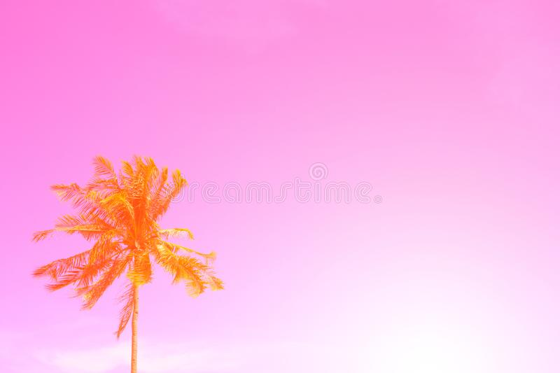 Palm tree on sky pink toned photo. Coco palm tree leaf banner with place for text. Tropical nature travel photo. Palm tree silhouette. Coconut palm poster royalty free stock image