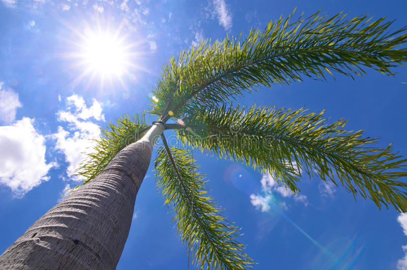 Download Palm tree stock image. Image of background, blue, sunny - 34147507