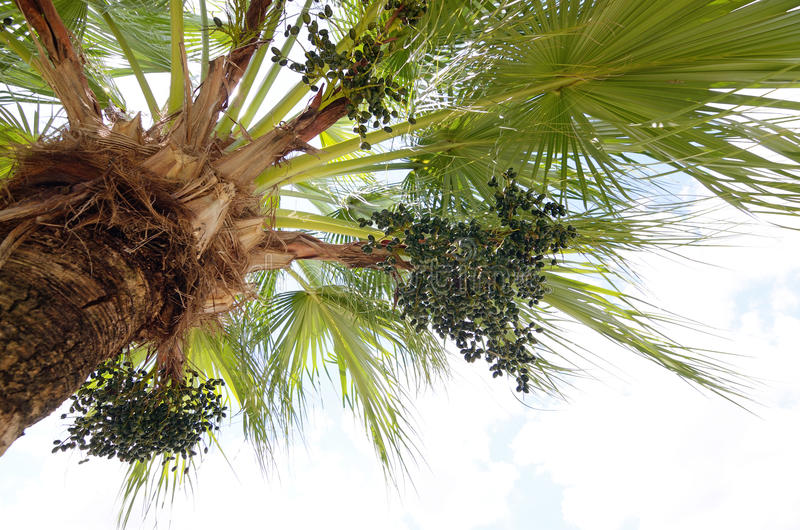 Download Palm tree stock image. Image of wallpaper, leaf, holiday - 34147635