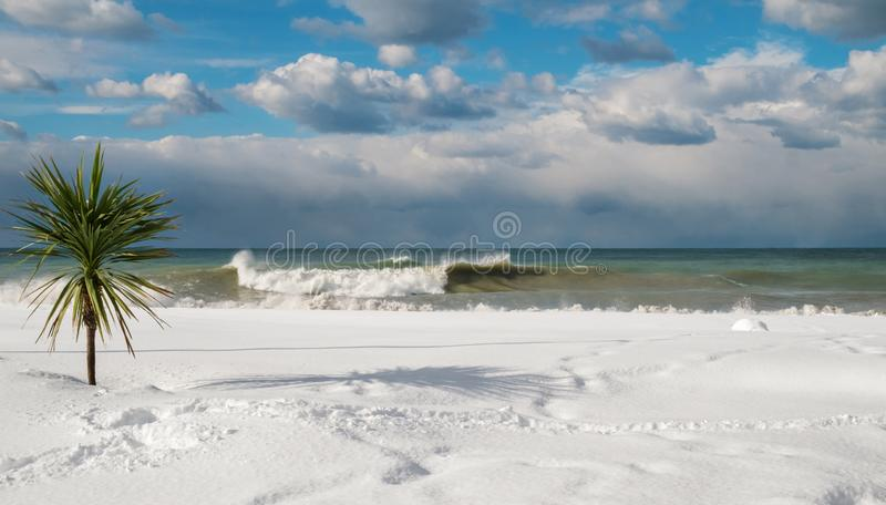Palm tree at the snow covered beach. Cloudy sky background royalty free stock photo