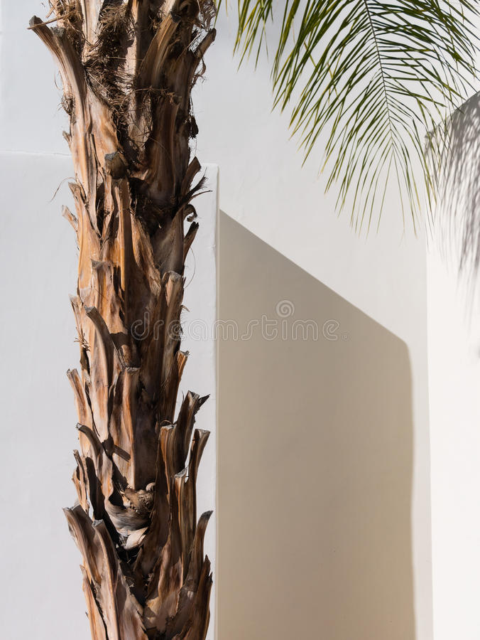 Free Palm Tree, Southwestern Architecture Stock Images - 36932534